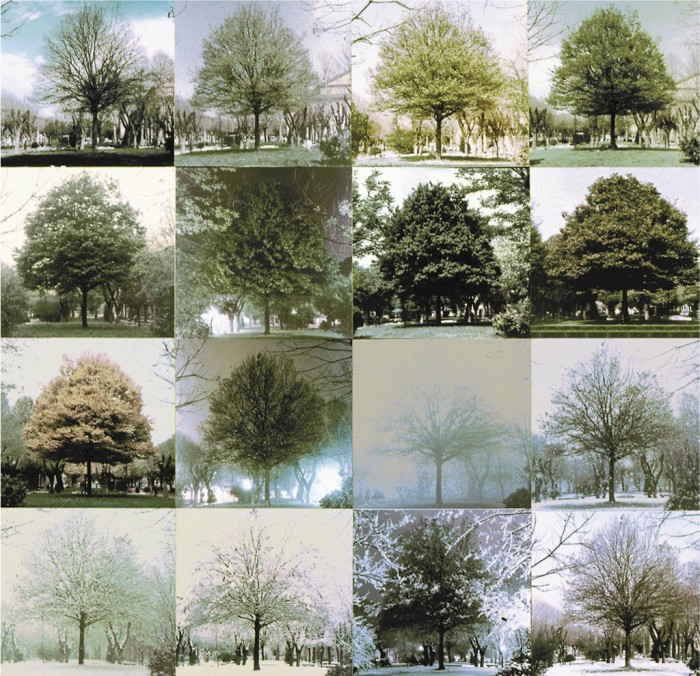 The Architecture Of Trees By Cesare Leonardi    Franca Stagi